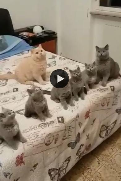 Quando ele decidir parar a brincadeira, os gatos vão estar desnorteados