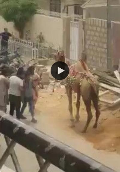 Nunca tente fazer gracinha com um camelo, você vai se arrepender