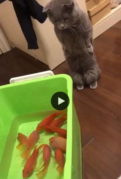 Decidindo qual peixinho vou comer primeiro