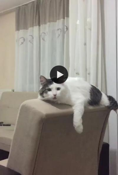 Esse gato não quer mais nada, ele passaria o resto da vida ali