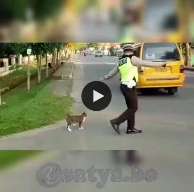 O cuidado com os animais é uma qualidade maravilhosa