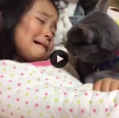 Esse gatinho fica comovido com o choro da garotinha