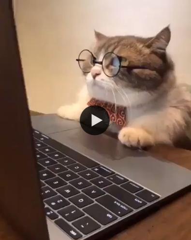 Esse é o gato mais intelectual que você vai ver
