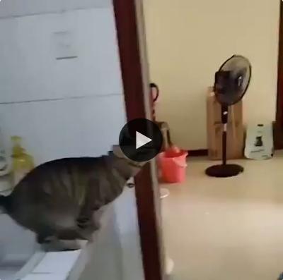 Esse gatinho tem um lugar meio inusitado para tirar seu descanso