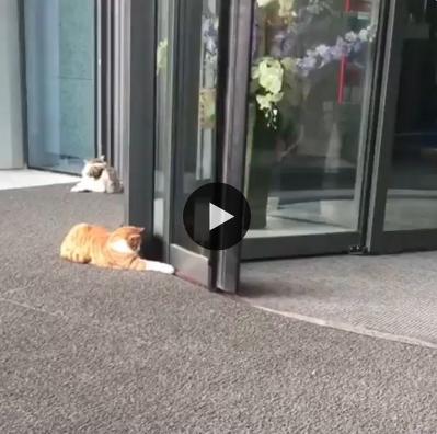 Esse gatinho adora brincar com a porta giratória