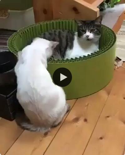Sai daqui folgado, nessa caixa só tem espaço para mim