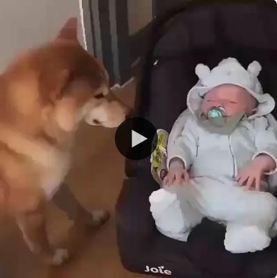O amor verdadeiro e carinho do cachorro pelo bebezinho
