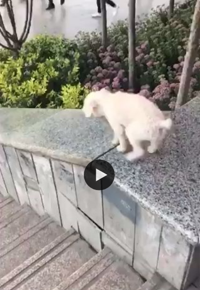 Esse cachorrinho fez a lateral da escada de escorrega