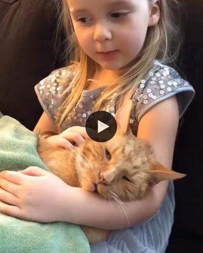 Com certeza esse gato é o melhor amigo que essa garotinha tem