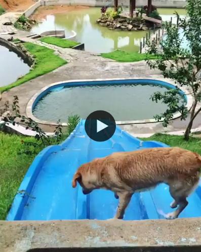 Esse cachorro é mais corajoso do que muito gente