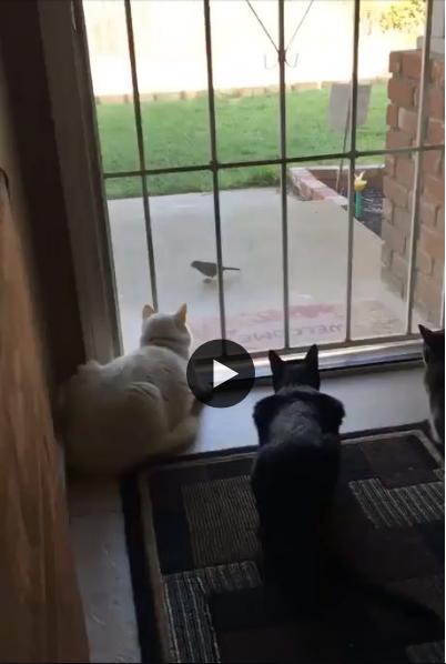 Depois desse susto, os gatinhos vão ficar mais espertos