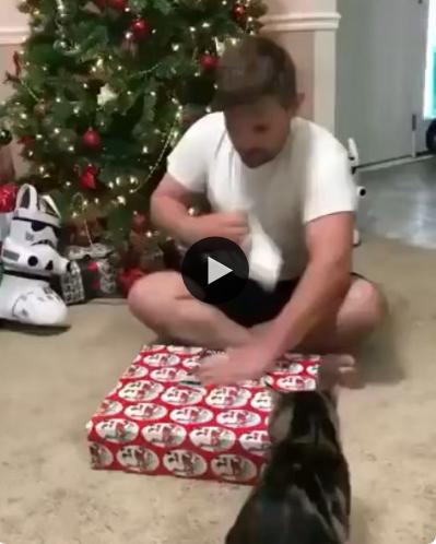 Esse gatinho não gostou nada, nada do presente que seu dono ganhou