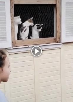 Desse jeito, esses gatos vão acabar ficando tontos
